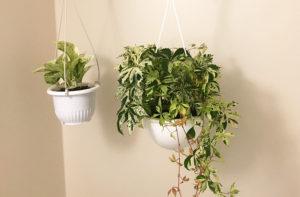 バスルームに観葉植物を入れてみた