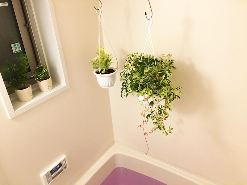 バスルームに観葉植物があると癒やし効果倍増するよ