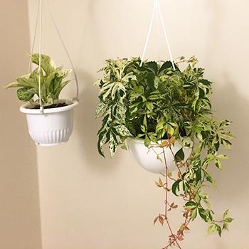 バスルームに観葉植物を飾ってみた