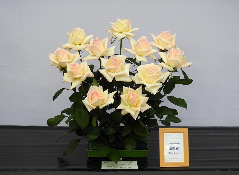 バラ切り花部門 アレンジメント 優秀賞