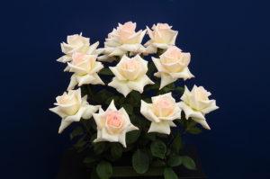 バラ切り花部門 大賞の「ファーストレディー・アキエ」