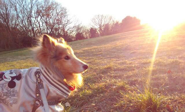 愛犬のシェルティーと思い出の丘